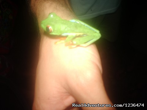 frogs found in Arenal - Costa Rica & Panama Tour  with Marvelus Travel