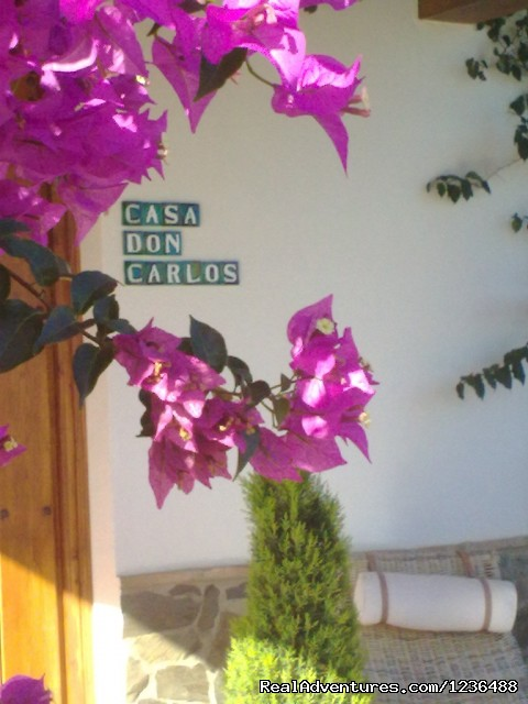 Welcome to Bed & Breakfast Casa Don Carlos - Bed & Breakfast | Guest House Casa Don Carlos