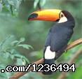 Hopkins Getaway Inland Tours Keel Bill Toucan