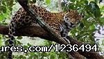 Cockscomb Basin Wildlife Sanctuary & Jaguar Preserve (#13 of 19) - Belize Salt water Fly Fishing