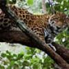 Cockscomb Basin Wildlife Sanctuary & Jaguar Preserve