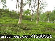 Dhaka-sylhet-Srimongal-Dhaka - French Bangla Tours