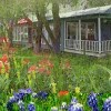 Cedars Cabins