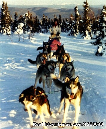 On the trail from Tolovana Hot Springs - Sled Dog Adventures