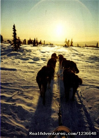 Into the sunset - Sled Dog Adventures