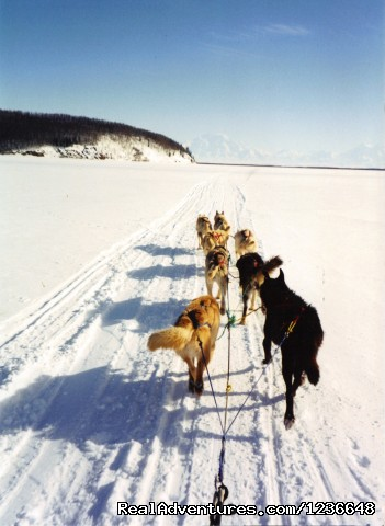 Lake Minchumina, Alaska - Sled Dog Adventures