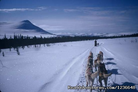 Brooks Range - Sled Dog Adventures