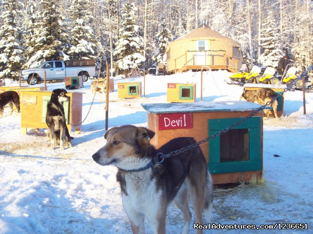 Upclose and Personal! - Paws for Adventure Sled Dog Tours