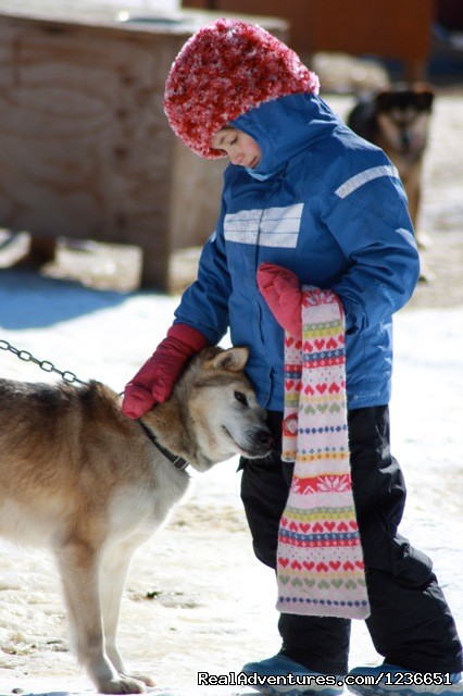 precious - Paws for Adventure Sled Dog Tours