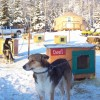 Paws for Adventure Sled Dog Tours