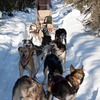 Alaskan Dog Sled & Horse Adventures