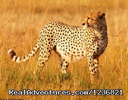- Travel and Tourism in kenya