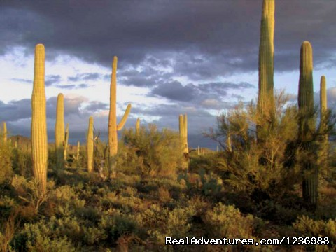 Adobe Desert Vacation Rentals: Desert view