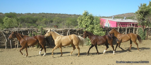 Horse Corral - Romantic Getaway at Historic Arizona Guest Ranch