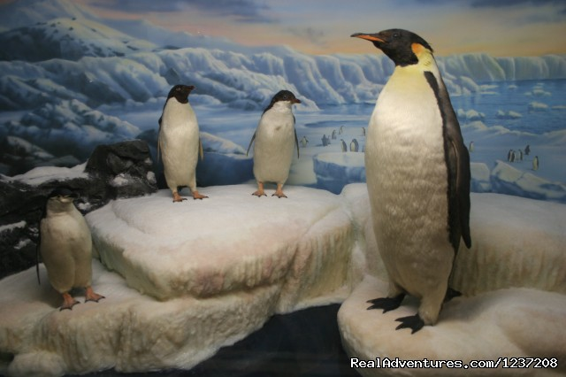 Penguin Exhibit - International Wildlife Museum