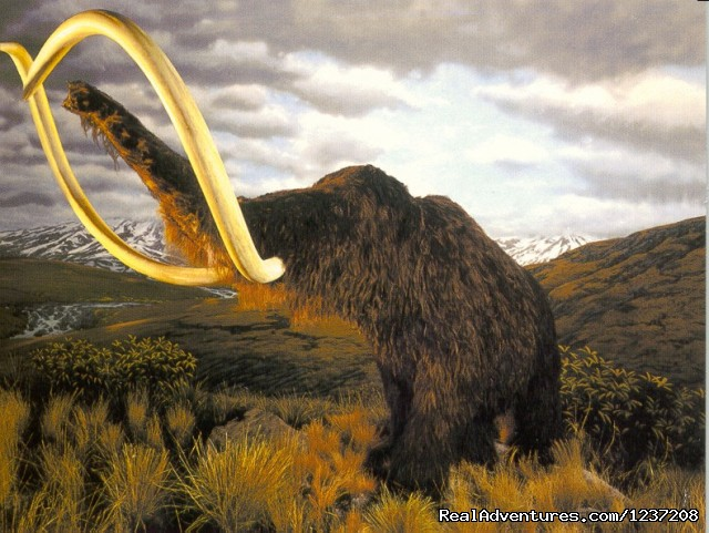 Woolly Mammoth Exhibit - International Wildlife Museum