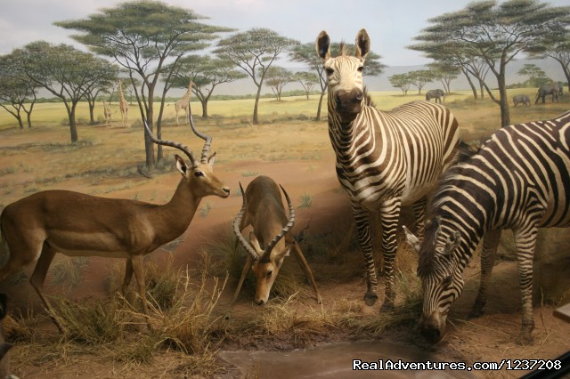 African Waterhole Exhibit (#3 of 8) - International Wildlife Museum