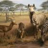 International Wildlife Museum African Waterhole Exhibit