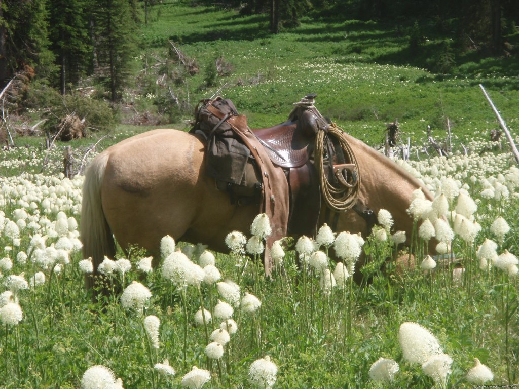 Bear Grass flowers fill the hillsides | Image #15/20 | Horseback Riding Adventures