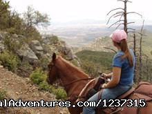 Wilderness Mountain Trail - Responsive Horses at Arizona Horseback Experience