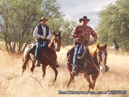 Image #3 of 9 - Responsive Horses at Arizona Horseback Experience