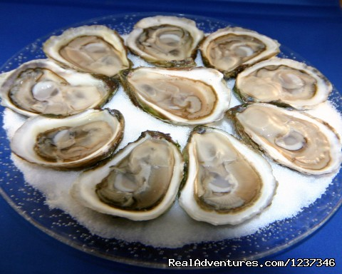 plate of Oysters - Paradise On The Sea Adventures