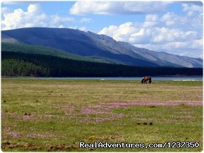 Horse trek Khovsgol Mongolia