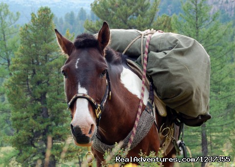 Stone Horse Expeditions & Travel, Packhorse (#7 of 26) - Mongolia Horseback Riding Tours  with Stone Horse