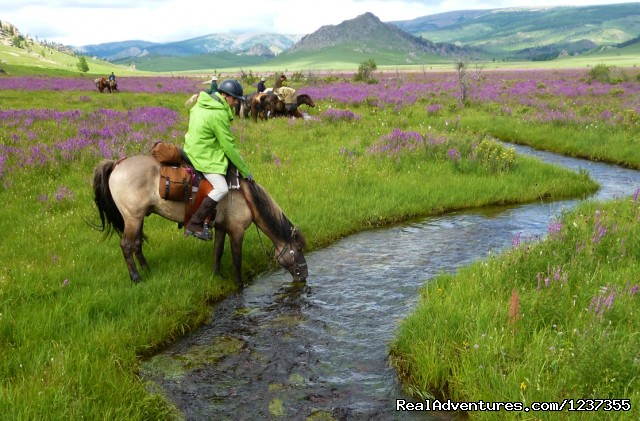 Stone Horse Expeditions & Travel, July is wildflower season - Mongolia Horseback Riding Tours  with Stone Horse