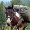 Stone Horse Expeditions & Travel, Packhorse