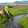Stone Horse Expeditions & Travel, July is wildflower season