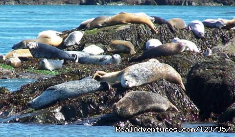 Seal watching from the M/V Island Quest - Island Quest Marine Whale & Wildlife Adventures