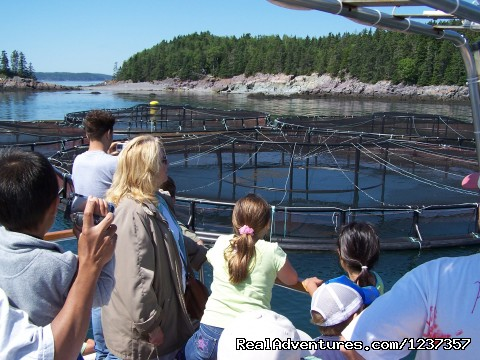 Island Quest Marine offers Educational Adventures  - Island Quest Marine Whale & Wildlife Adventures
