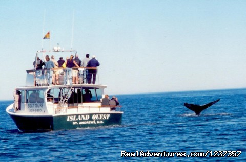 What a view of some curious Humpbacks - Island Quest Marine Whale & Wildlife Adventures