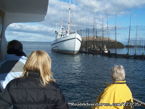 Culture, History and Marine Wildlife (#7 of 26) - Island Quest Marine Whale & Wildlife Adventures