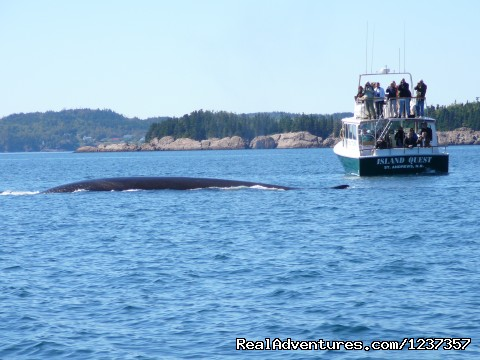 WOW! Fin Whales - Island Quest Marine Whale & Wildlife Adventures