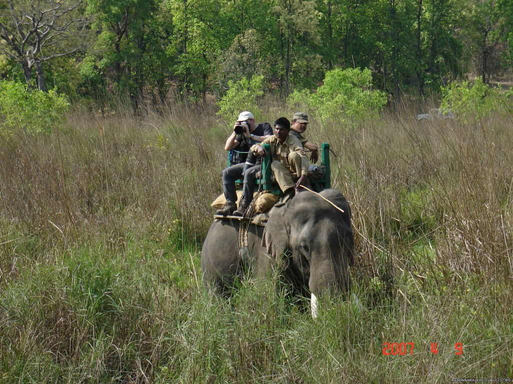 Tiger tracking by Elephant | Image #9/15 | Gay Tours to India Nepal & Bhutan