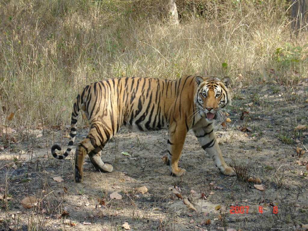 Tiger Tiger  | Image #15/15 | Gay Tours to India Nepal & Bhutan