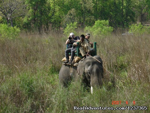 Tiger tracking by Elephant (#10 of 16) - Gay Tours to India Nepal & Bhutan