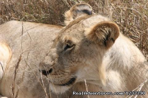Image #2 of 4 - Best Kenya Safaris