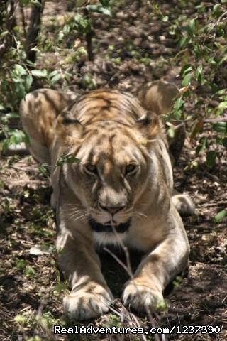Image #4 of 4 - Best Kenya Safaris