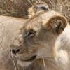 Best Kenya Safaris