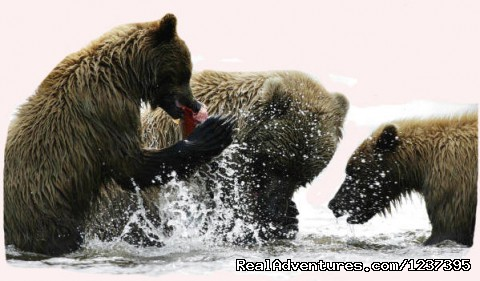 Bears - Upscale Lodging on the Kenai River, Alaska