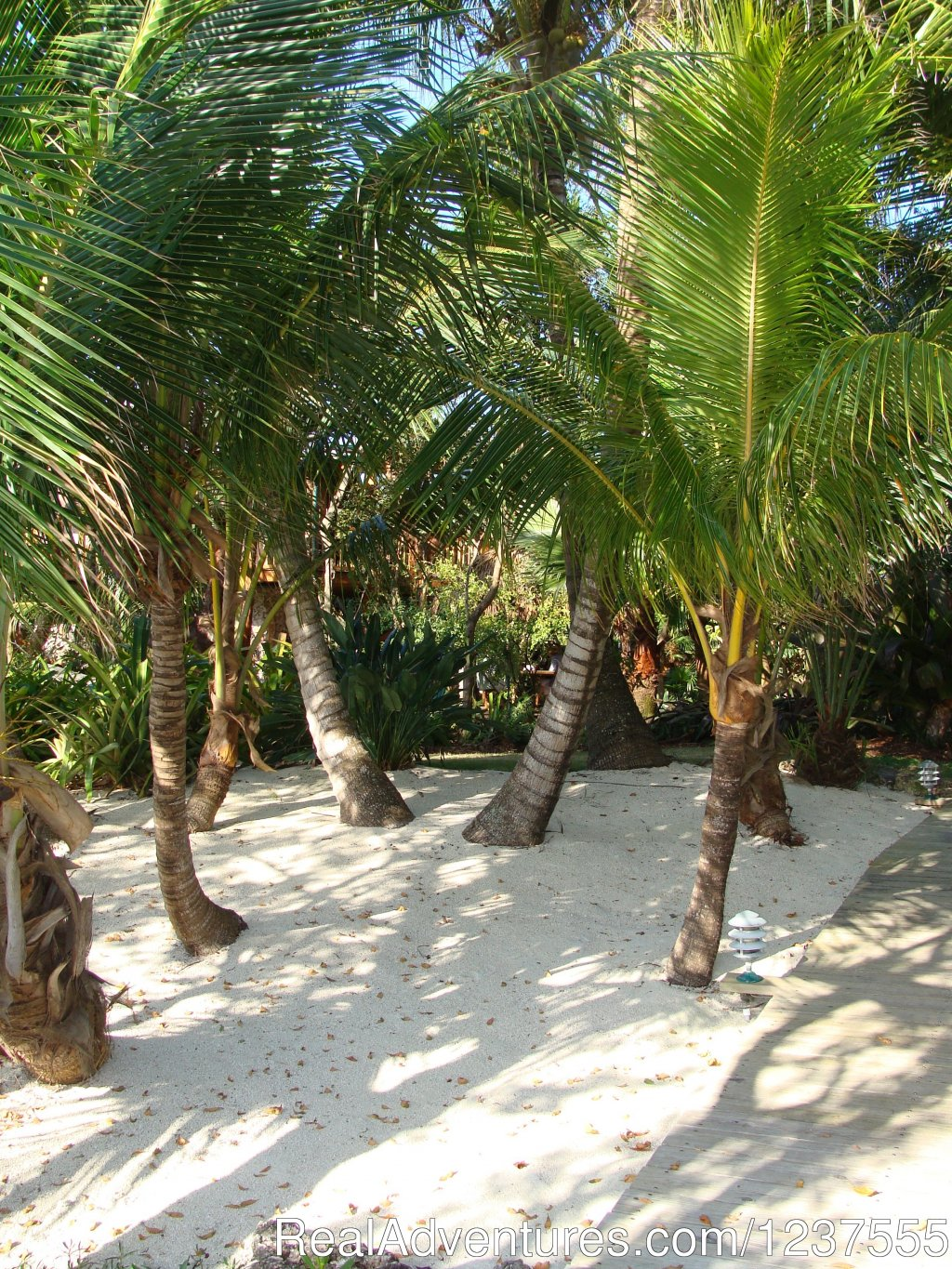 Follow the coconut palms to the beach. | Image #10/24 | Seabird Key, Private Island,  Sandy beach & boat