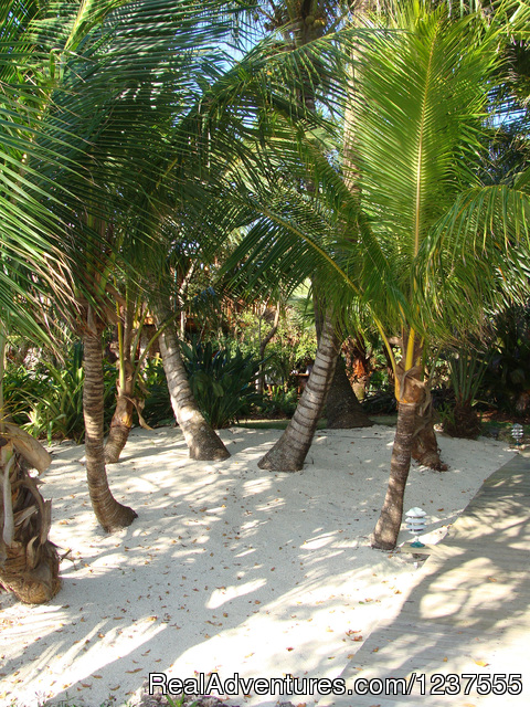 Follow the coconut palms to the beach. - Seabird Key, Private Island,  Sandy beach & boat