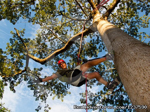 Climbing an Kapok Tree (Ceiba pentandra) - Tree Climbing and Hiking in the Amazon Rainforest