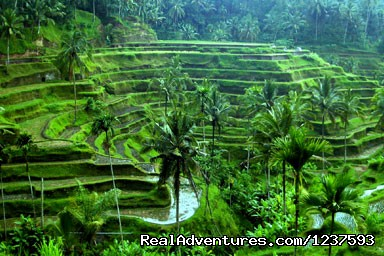 - Bali Package Tour 3 Days with Reasonalbe Price