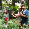 Tropical Inn, Lovelocks