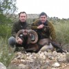 Muflon Muffel Muflon