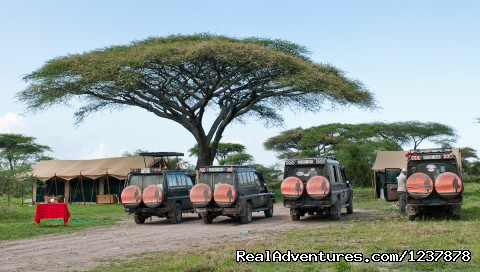 Mw's vehicles, back at the camp on the serengeti - Maasai Wanderings- The Great Migration